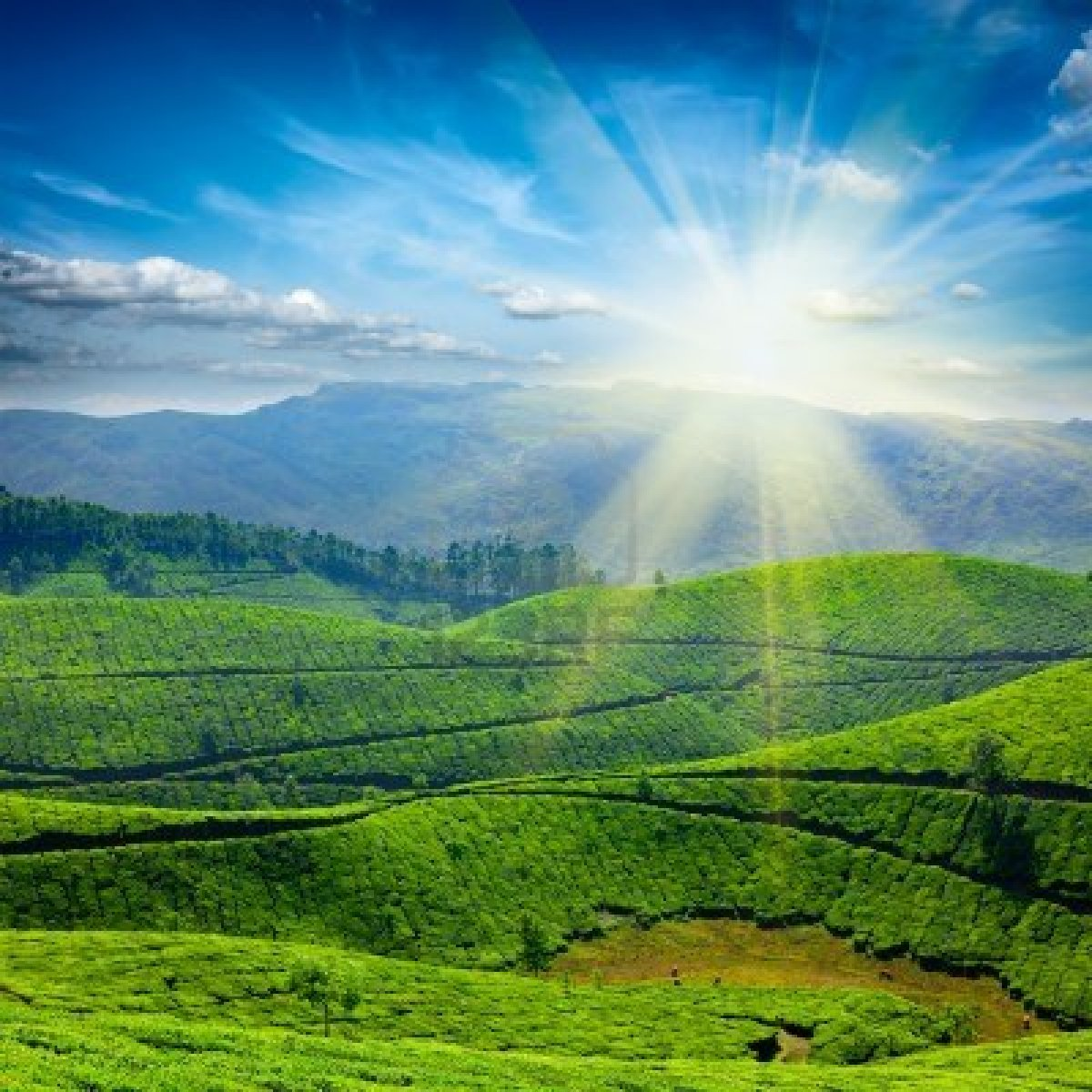 Munnar Destination That Must Visit In Kerala Shanayashah29