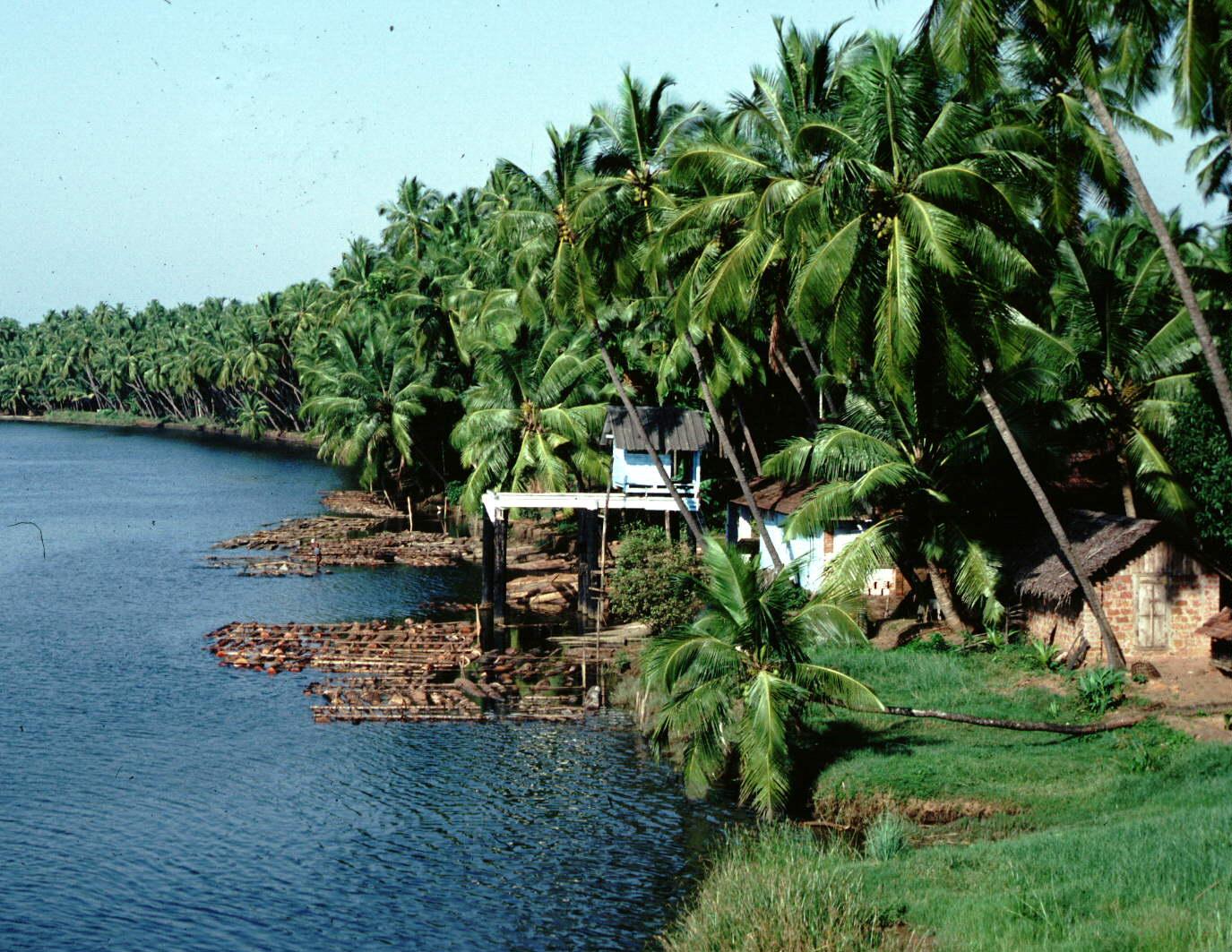 Munnar Destination That Must Visit In Kerala Shanayashah29